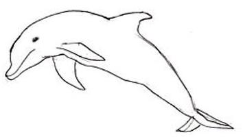 Как рисовать дельфина