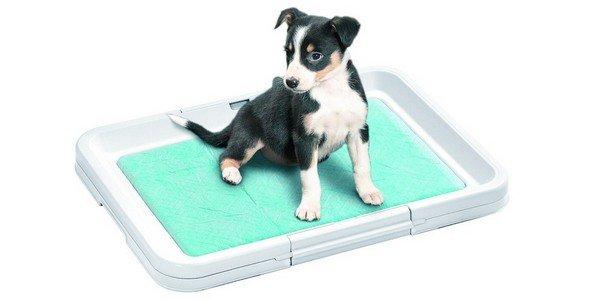 Как щенка приучить к туалету дома