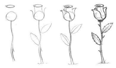 Как нарисовать розу видео
