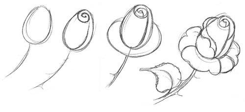 Как поэтапно нарисовать розу в вазе карандашом