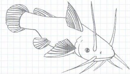 Как нарисовать карандашом поэтапно скайрим 156