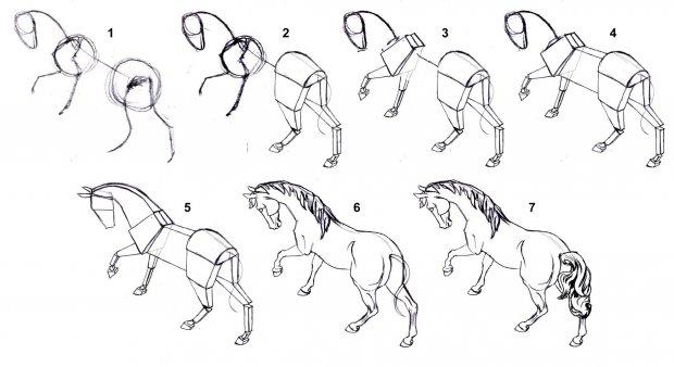 строение копыта лошади схема