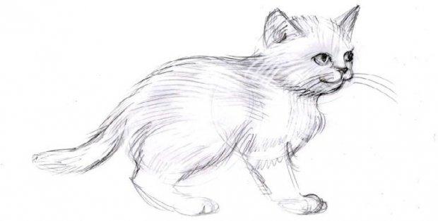 как рисовать котов аниме: