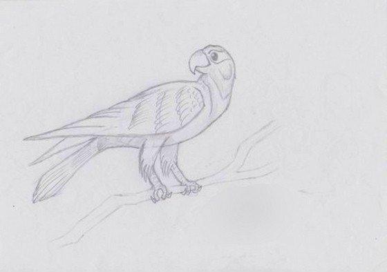 Как рисовать попугая
